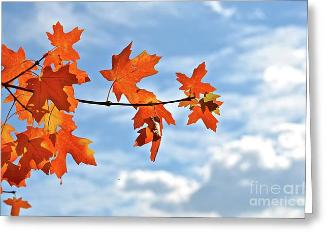 Sky View With Autumn Maple Leaves Greeting Card