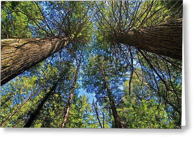 Greeting Card featuring the photograph Skyward by Gary Lengyel