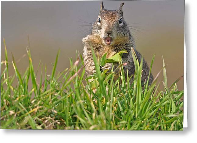 Slack-jawed Squirrel Greeting Card