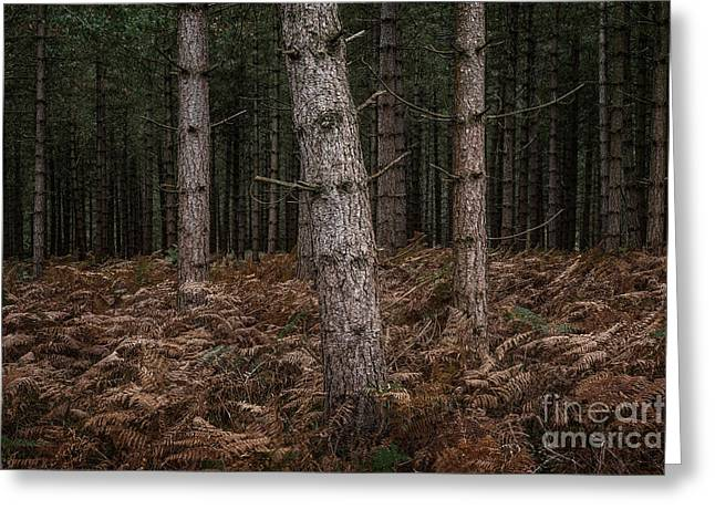 Slant New Forest Greeting Card by Richard Thomas