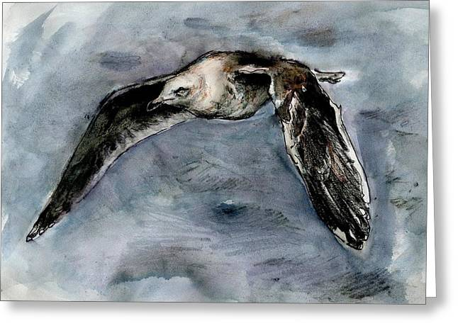 Slaty-backed Gull Greeting Card