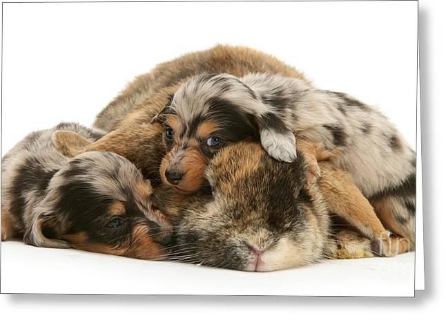 Sleep In Camouflage Greeting Card