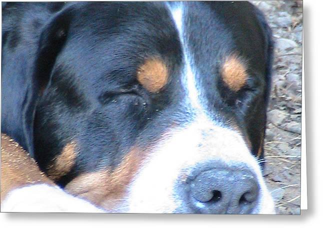 Sleeping Beast Greeting Card by Rachel Snell