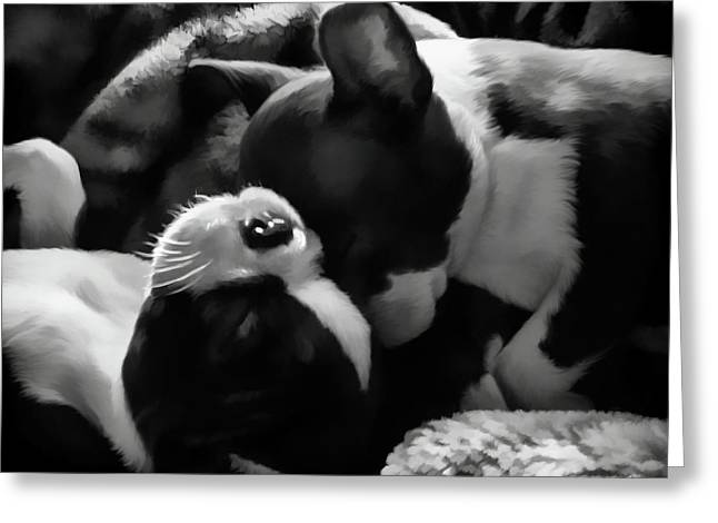 Sleeping Beauties - Boston Terriers Greeting Card