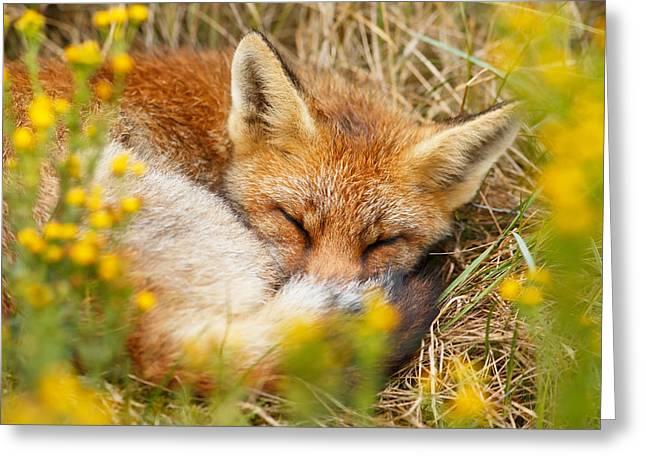 Sleeping Beauty - Sleeping Red Fox Greeting Card by Roeselien Raimond