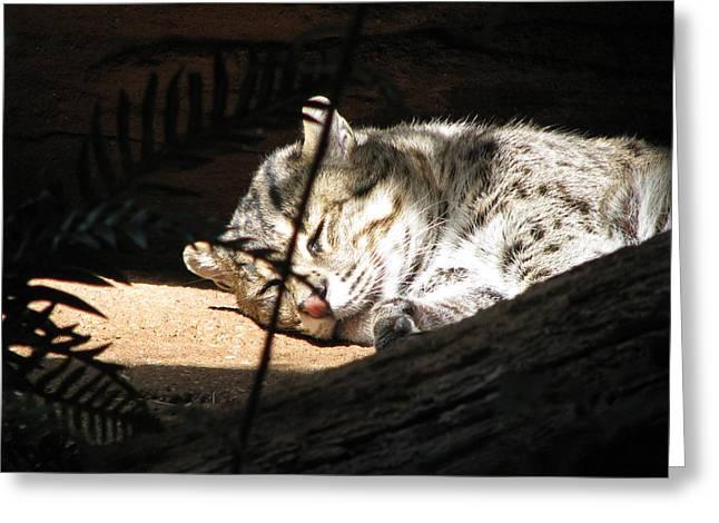 Sleeping Cat Greeting Card by Jason Moore