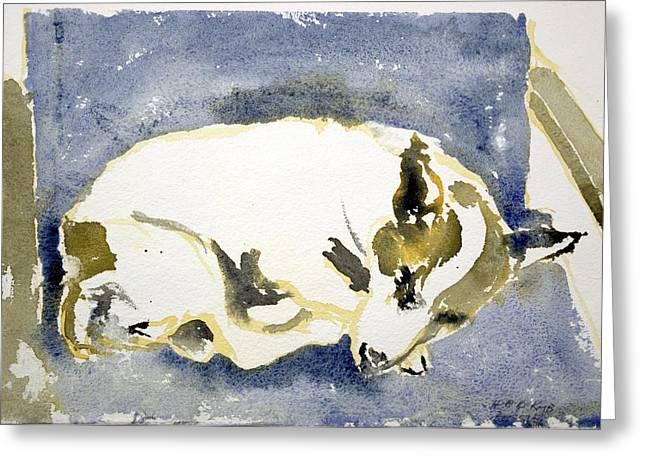 Sleeping Dog Greeting Card