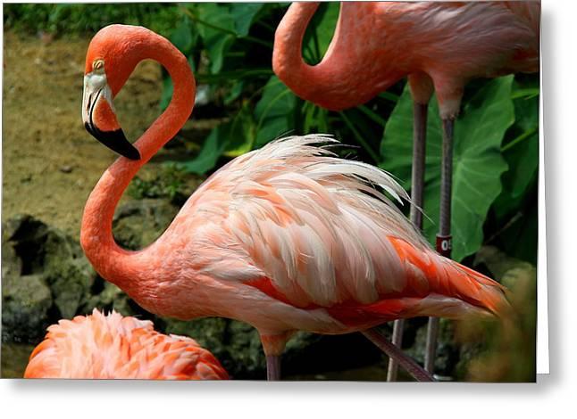 Sleeping Flamingo Greeting Card