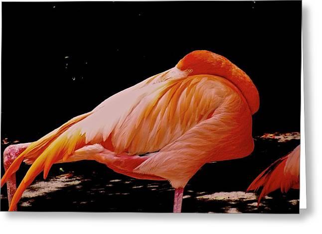sleeping Flamingo  Greeting Card by Mariano Rivera