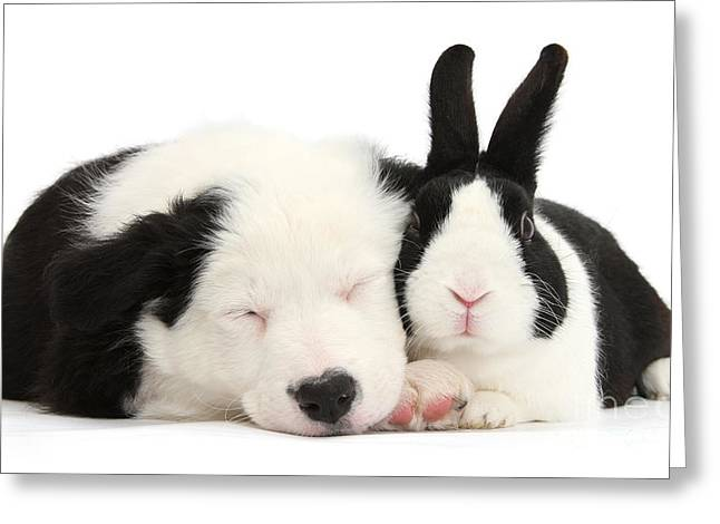 Sleeping In Black And White Greeting Card