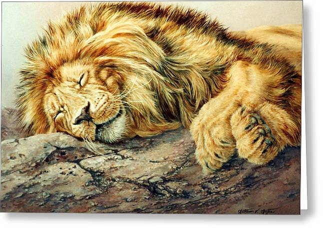 Sleeping Lion Greeting Card by Kathleen V  Butts