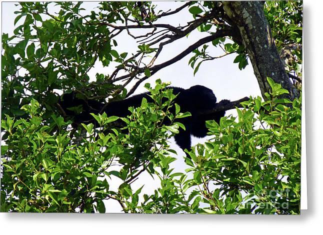 Greeting Card featuring the photograph Sleeping Monkey by Francesca Mackenney
