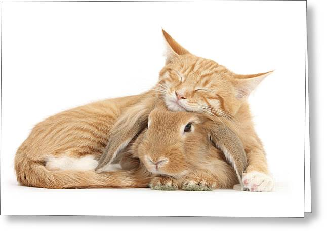 Sleeping On Bun Greeting Card