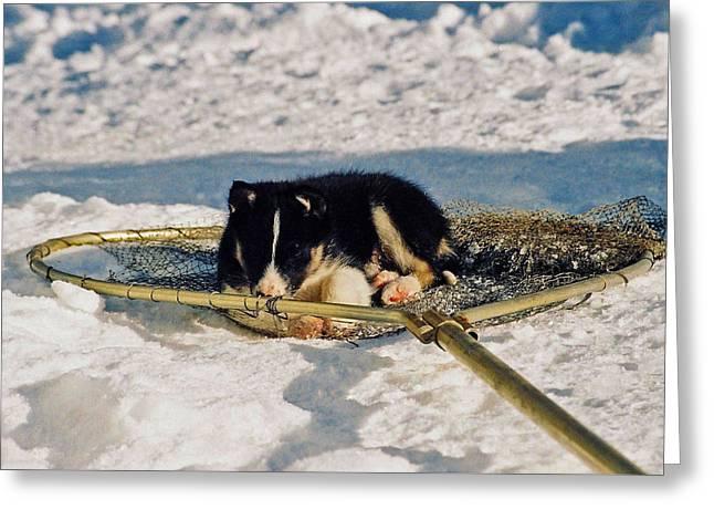 Sleeping Puppy Greeting Card by Juergen Weiss