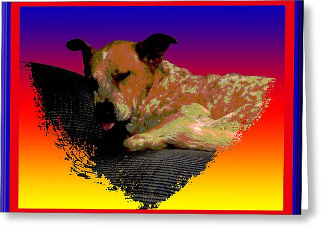 Sleeping Soundly Greeting Card by One Rude Dawg Orcutt