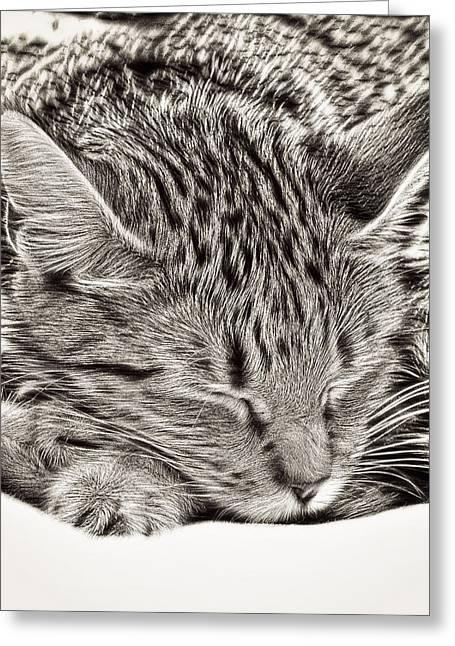 Sleeping Tabby Greeting Card