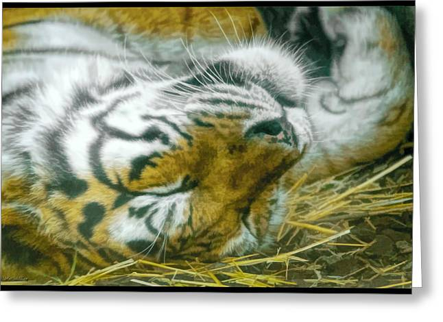 Sleeping Tiger Greeting Card by LeeAnn McLaneGoetz McLaneGoetzStudioLLCcom