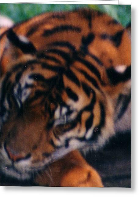 Sleeping Tiger  Greeting Card by Steve  Heit