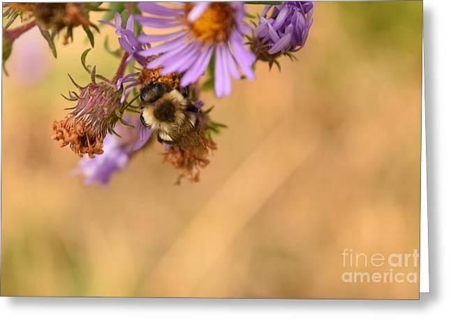 Sleepy Bee On New England Aster Horizontal Greeting Card by Rowena Throckmorton