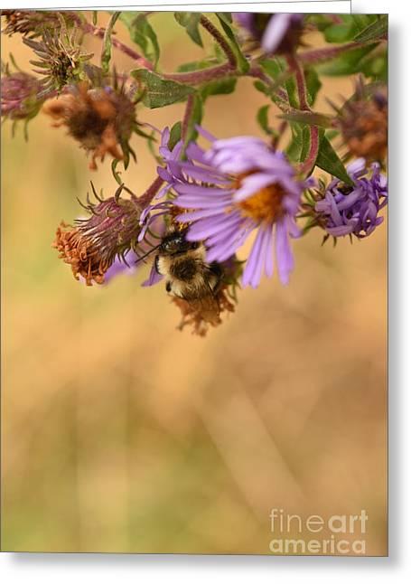 Sleepy Bee On New England Aster Vertical Greeting Card by Rowena Throckmorton