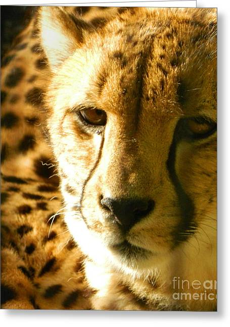 Sleepy Cheetah Cub Greeting Card by Emmy Marie Vickers