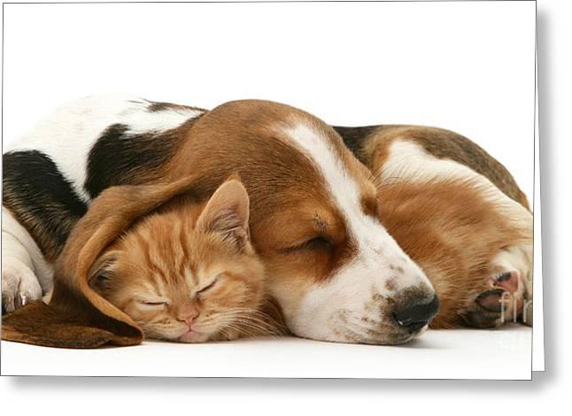 Sleepy Ginger Pals Greeting Card
