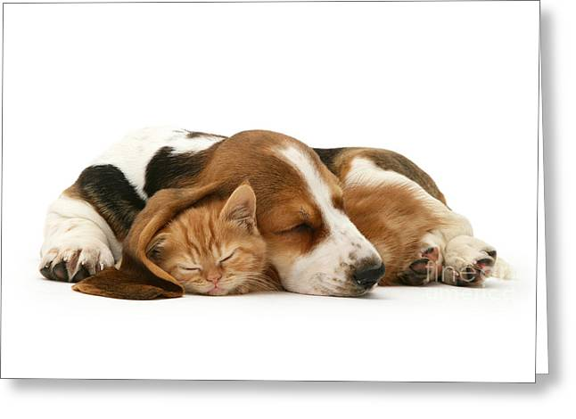 Sleepy Ginger Pals Greeting Card