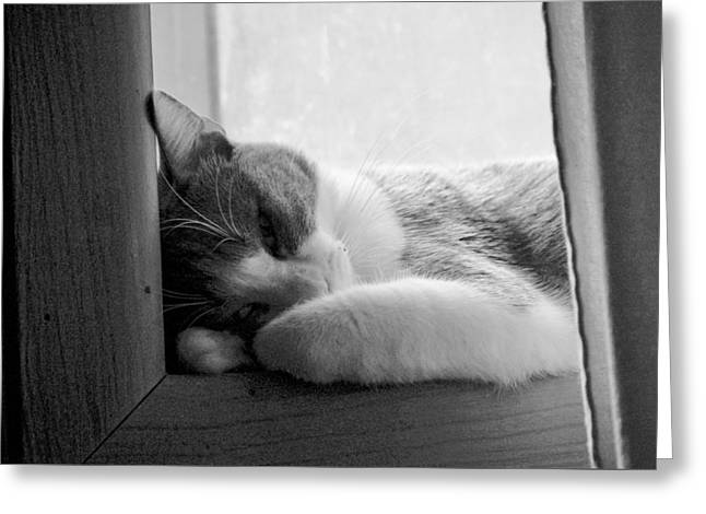 Sleepy Kitty Greeting Card