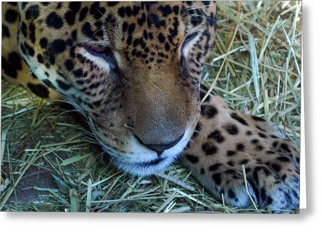 Sleepy Leopard Greeting Card