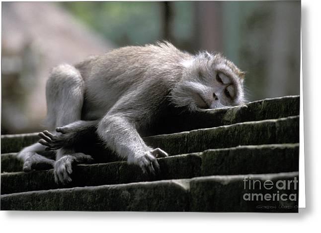 Sleepy Monkey In Monkey Forest Ubud Bali Greeting Card by Gordon Wood