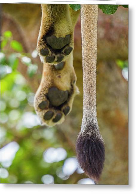 Sleepy Paws Greeting Card by Simone Amaduzzi Photographer