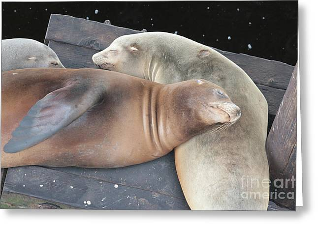 Sleepy Sea Lions Greeting Card