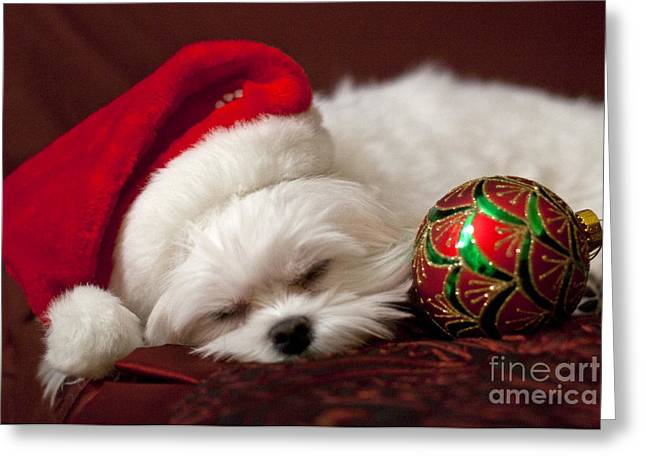 Sleepy Time Greeting Card by Leslie Leda
