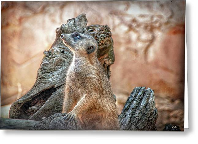 Greeting Card featuring the photograph Slender-tailed Meerkat by Hanny Heim