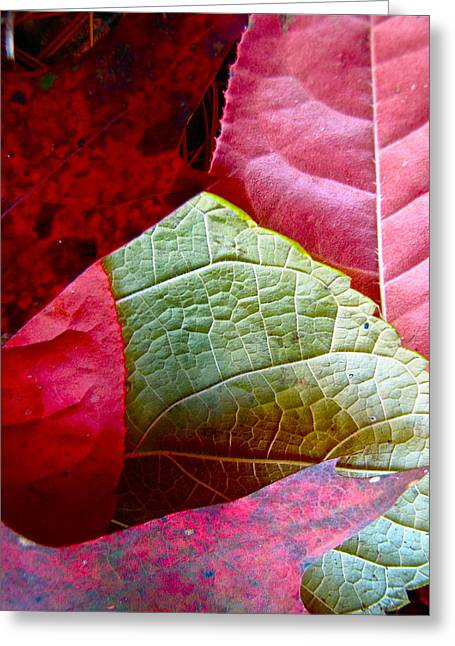 Slices Of Fall Greeting Card