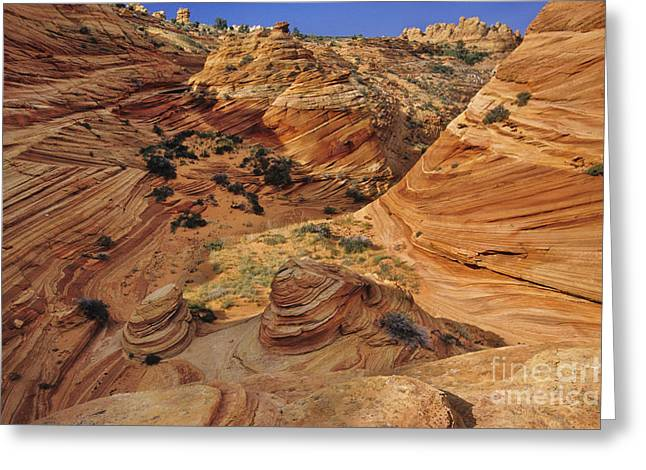 Slickrock, Vermilion Cliffs, Usa Greeting Card by Frans Lanting/MINT Images