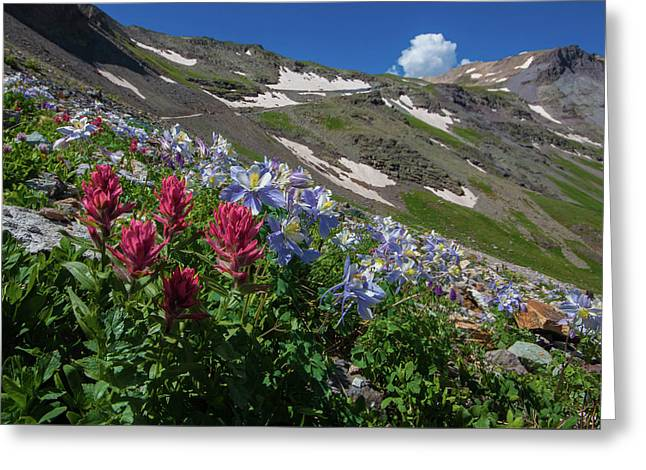 Slippery Slope Of Indian Paintbrush And Columbine Greeting Card