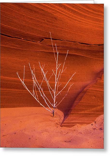 Slot Canyon Sentinel Greeting Card
