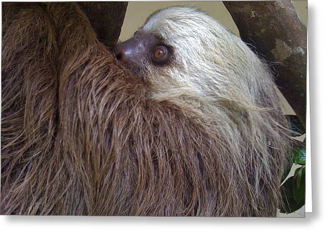 Sloth Greeting Cards - Sloth Greeting Card by Dolly Sanchez