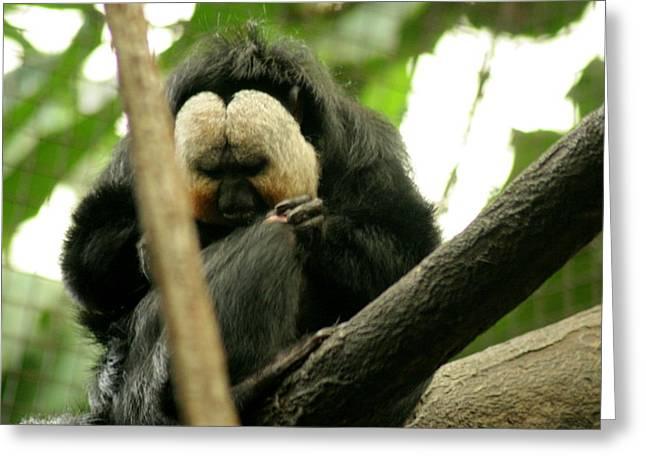 Sloth Greeting Card by ShadowWalker RavenEyes Dibler