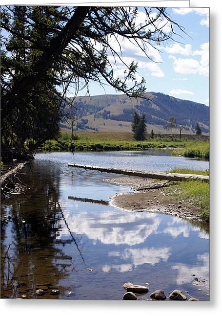 Slough Creek 1 Greeting Card by Marty Koch