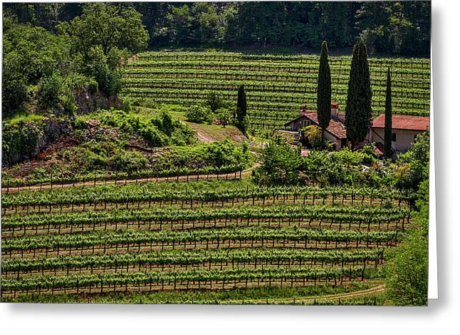 Greeting Card featuring the photograph Slovenian Vineyard by Stuart Litoff