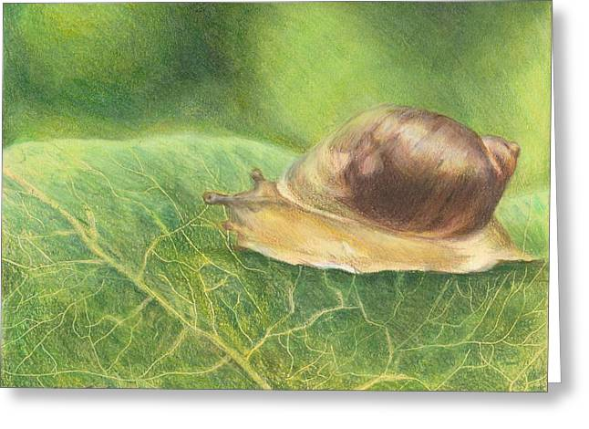 Slow And Steady Greeting Card by Shana Rowe Jackson