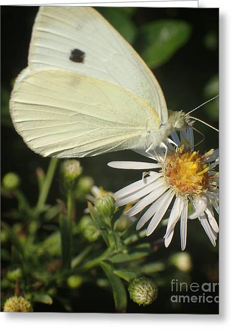 Sm Butterfly Rest Stop Greeting Card