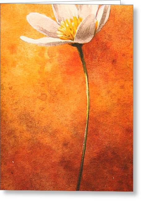 Small Anemone Greeting Card by John Francis