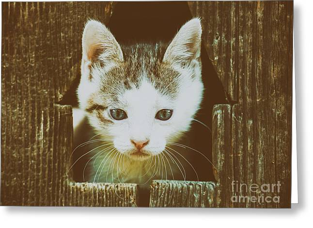 Small Baby Kitty Cat Portrait Greeting Card