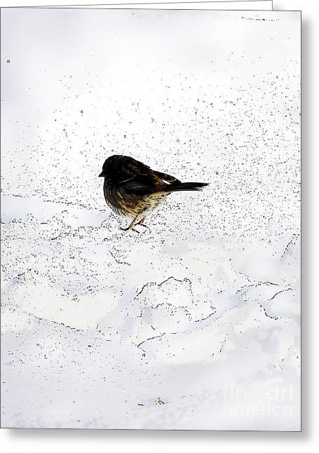 Small Bird On Snow Greeting Card