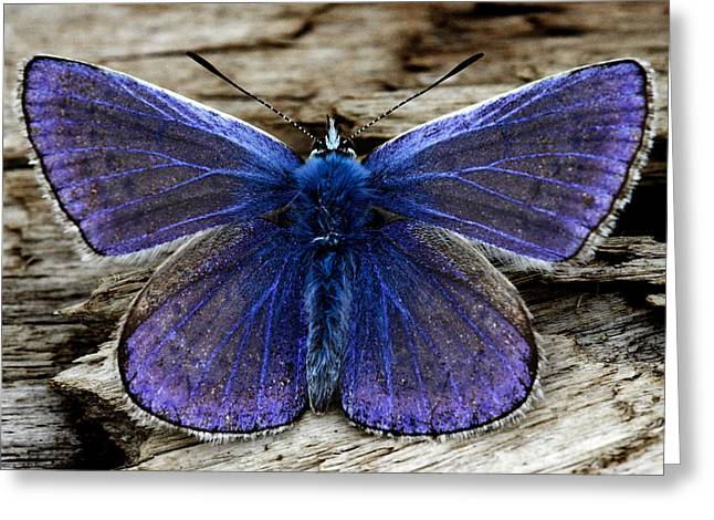 Small Blue Butterfly On A Piece Of Wood In Ireland Greeting Card by Pierre Leclerc Photography