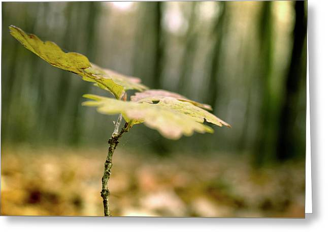 Small Branch With Yellow Leafs Close-up Greeting Card