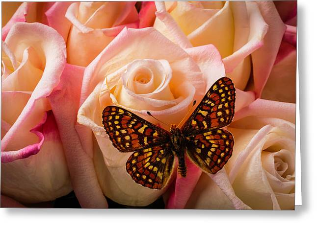 Small Butterfly On Pink Roses Greeting Card
